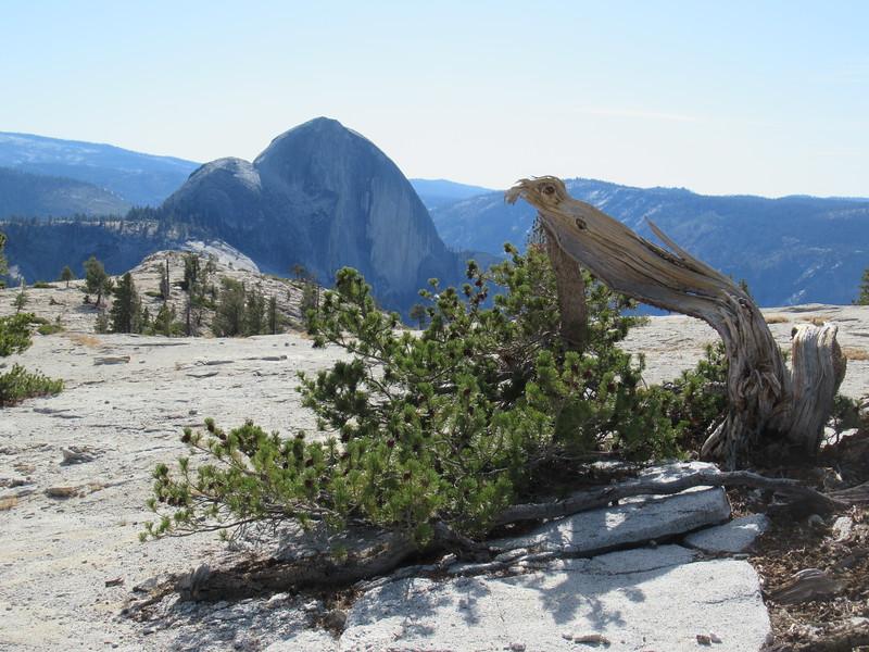 The backside of Half Dome in Yosemite, California
