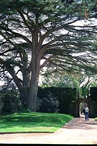 Athelhampton Gardens