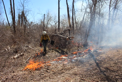 Prescribed Burn - Great Meadows Marsh, Stewart B. McKinney NWR, Stratford, CT - 3/30/2021