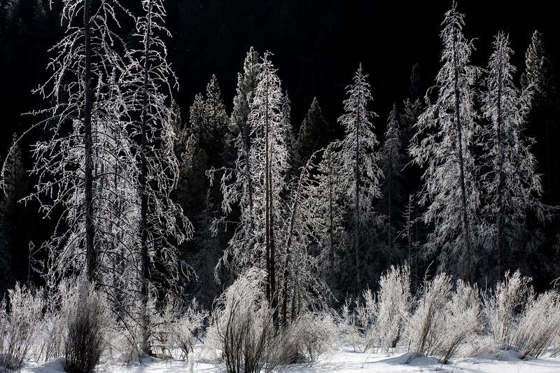frost-trees1.jpg