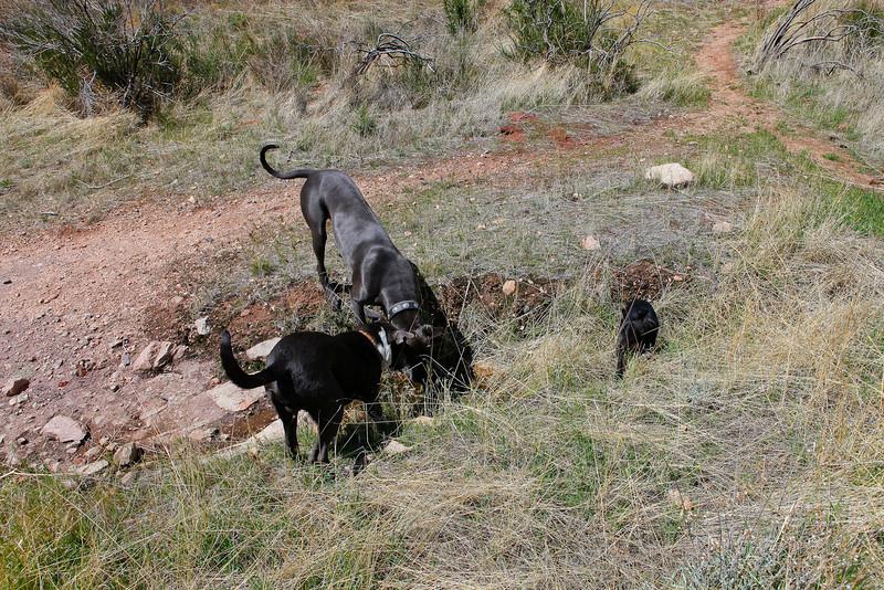 dogs_vasquez_104.jpg