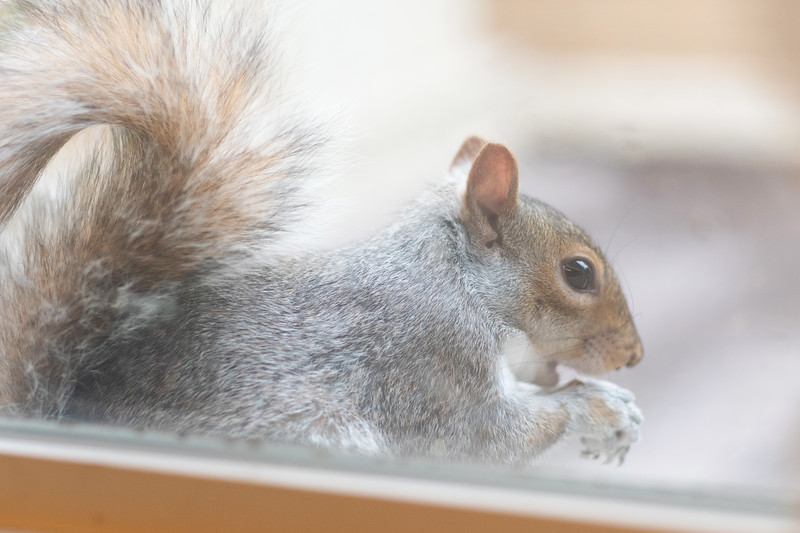 squirrel002.jpg