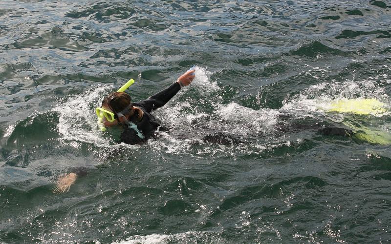 Schwimmen mit den Delphinen