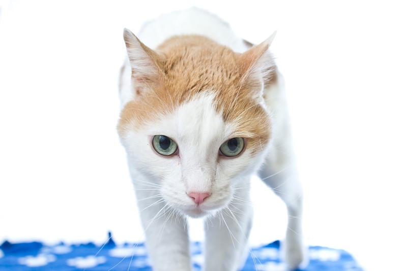 1202_Cats_069.jpg