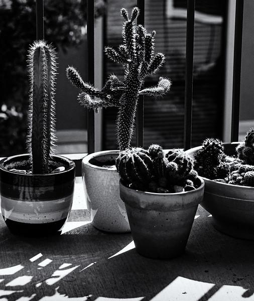 Cacti-.jpg
