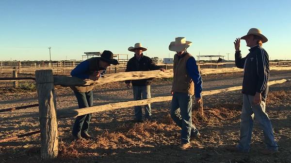Horse course video