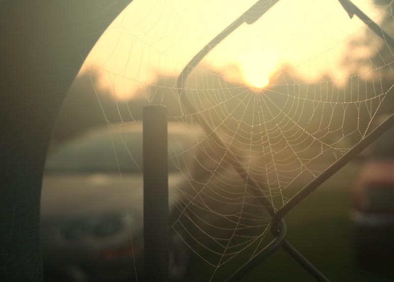 Just a cobweb