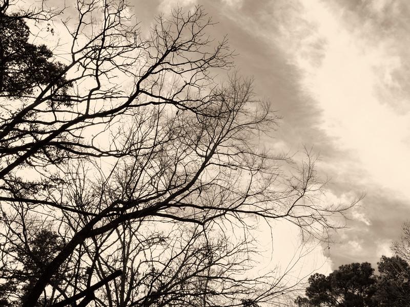 2019-12-25 Tree_PAN1934.jpg