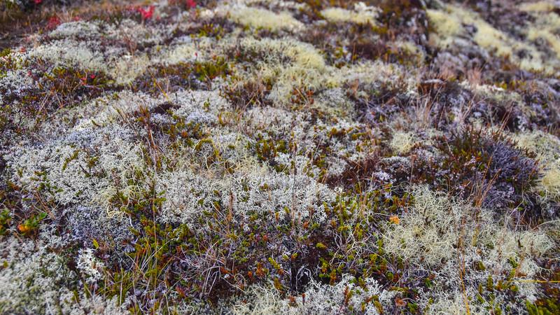 Iceland_2015_10_06_10_33_54.jpg