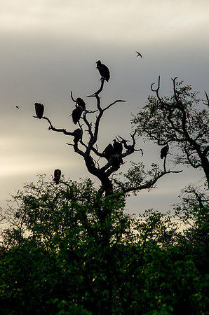 First Trip to Kruger (12 Photographs)