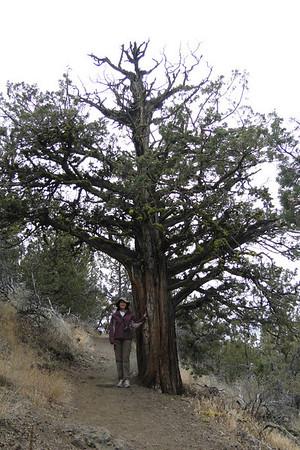Schonchin Butte - September 2010