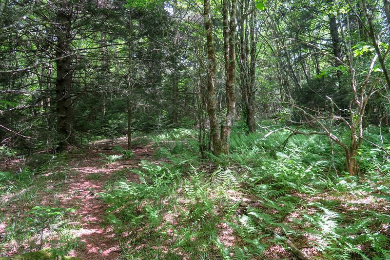 Green Mountain Trail -- 5,770'
