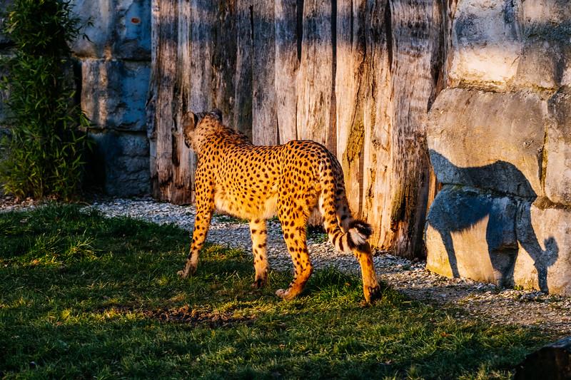 Tonis Zoo-0281.jpg