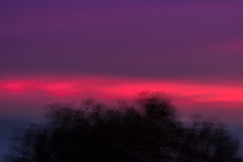 December 2 - Sunset over a shaking tree on a cold fall night in Los Angeles.jpg