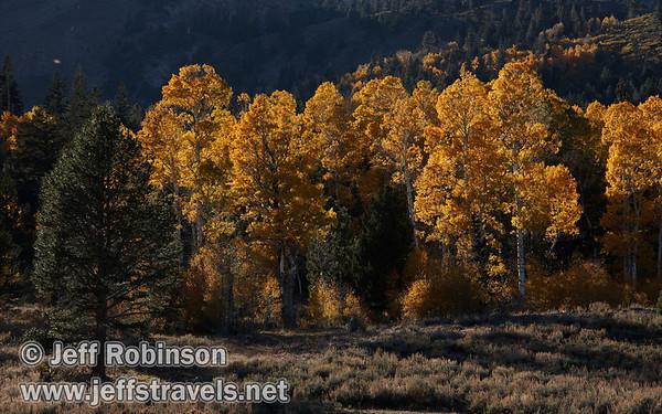 Sierra Fall Colors 10/22/2011