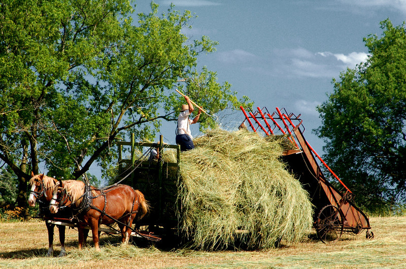 023 Amish Hay wagon.jpg