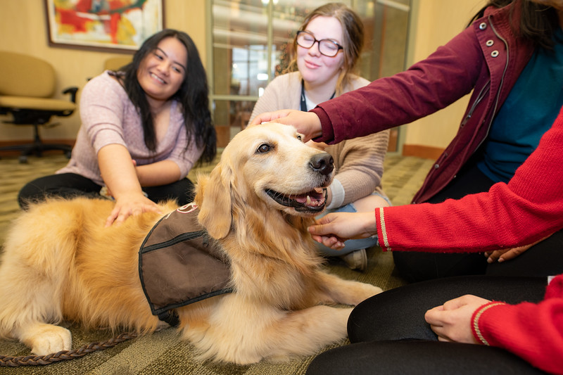 Therapy Dogs Sassy-7135.jpg