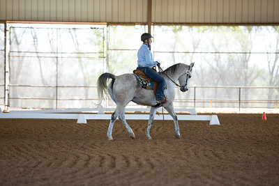 Horse 491
