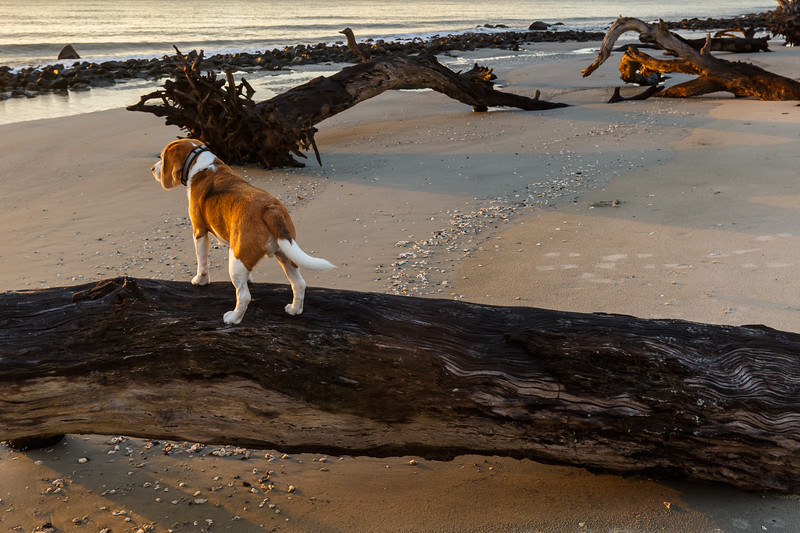 The Intrepid Beagle Explorer