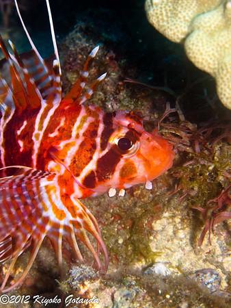 2012-08 Kona, Hawaii