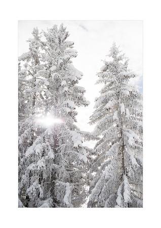 Neige - Snow