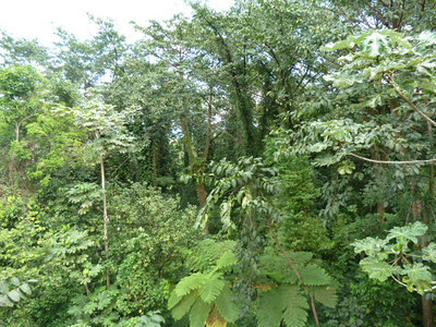 USA: El Yunque National Forest, PR (2011)