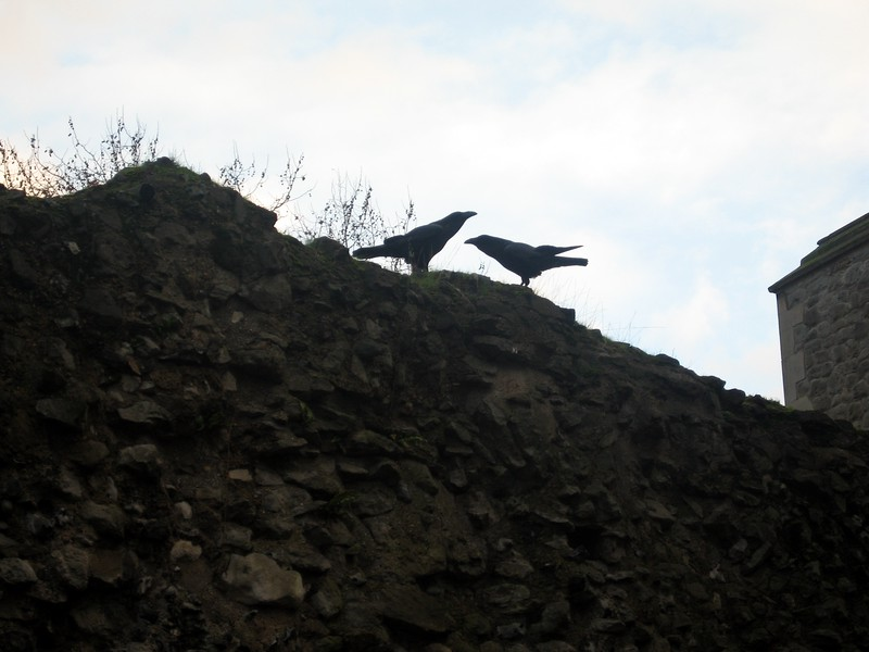 Two ravens outside the White Tower