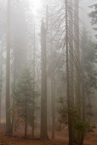 giants fog one.jpg