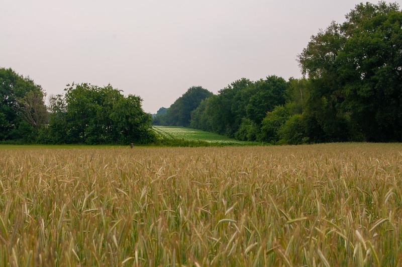 Itterdal & Solterheide, omgeving Opitter en Neerglabbeek 22.jpg