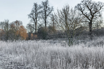 Colney Heath Winter