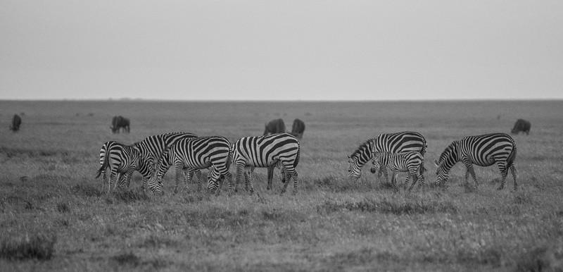 Tanzania_Feb_2018-629.jpg