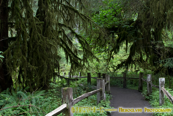 Exploring Olympic Peninsula