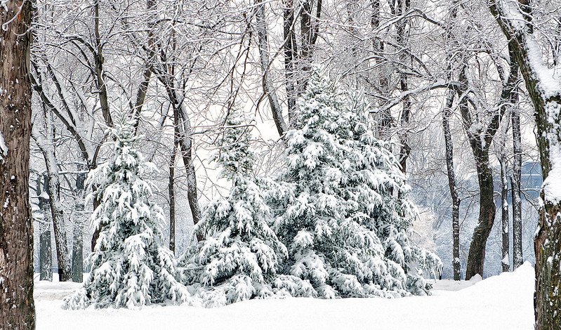 snowing-140202-dsc_0069.jpg
