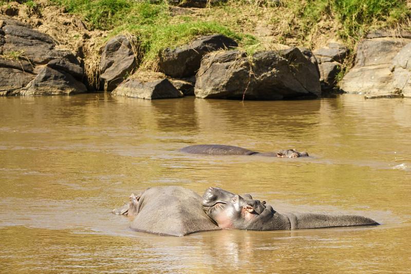 Kenya 2015-03664.jpg