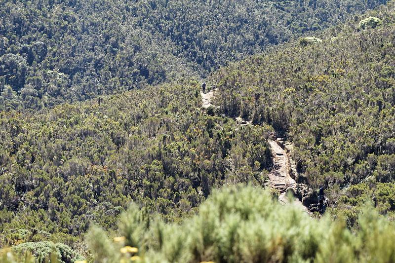 Kilimanjaro Ascent Day 3 - Hike to Shira I Camp
