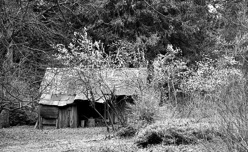 so many spring 3-20-2013.jpg