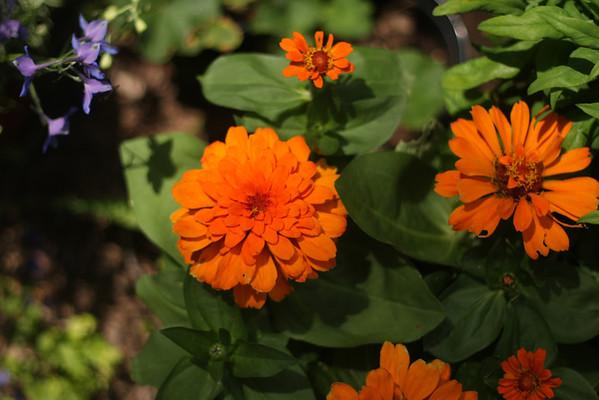 clarke county, virginia flowers