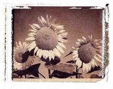 Polaroid Transfer Images
