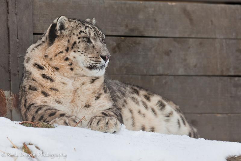 Zoo_Feb13_2011-16.jpg