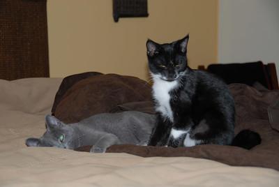 Bailey and Diablo