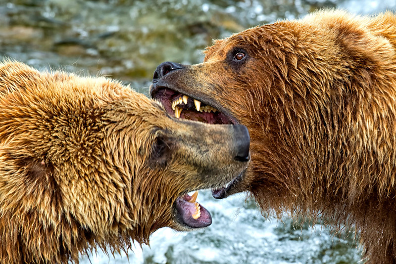 Alaska_2013_FH0T9518.jpg