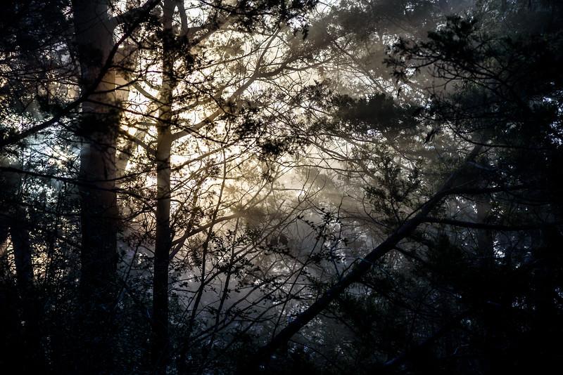 Sunrise-Fog-ThroughPines5