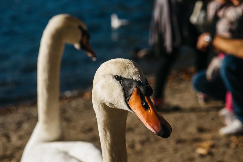 Lake Com &  Lake Lugano Adventure-287.jpg