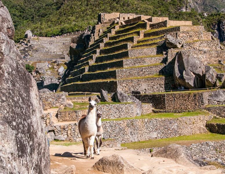 Macchu Pichu-20.jpg