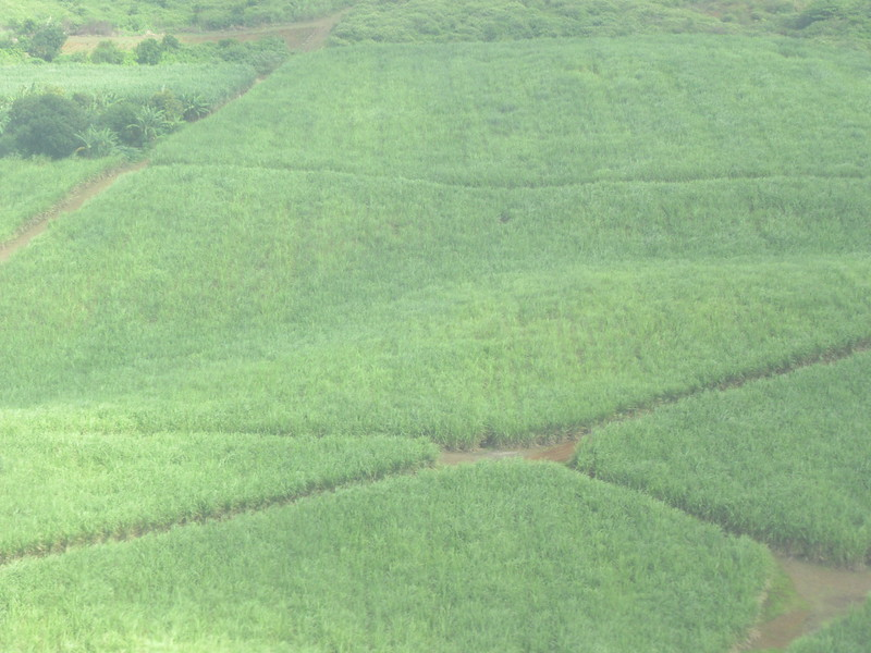 012_Sugar Cane Industry. Harvesting (75% by hand) from June to December.JPG