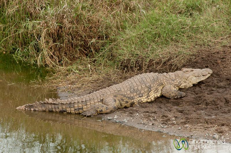 Crocodile Lazing on the Shore - Serengeti, Tanzania