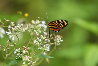 Bonempack mariposa0181.jpg