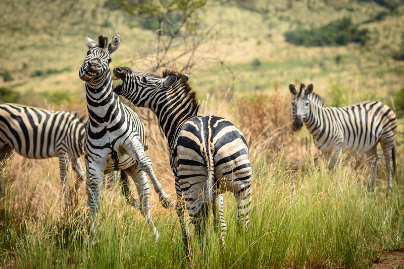 Pilanesberg-20130217-0538