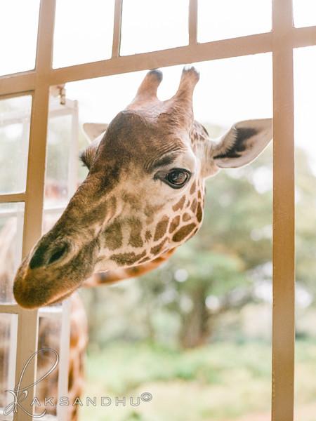 Safari-Africans-149.jpg