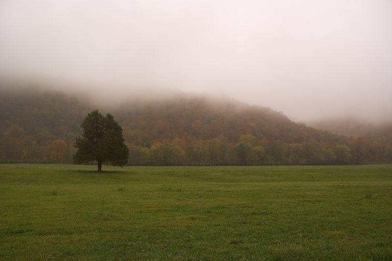 Fog in Boxley Valley. Near Ponca, AR.  Buffalo National River